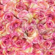 Roses Background Art Print