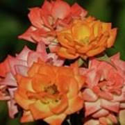 Pink And Orange Roses Art Print