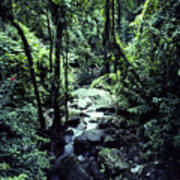 Rushing Stream El Yunque National Forest Art Print