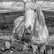 Rustic Horse  Art Print