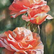 Salmon Colored Roses Art Print by Sharon Freeman