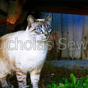 Sapphire Eyed Cat Art Print