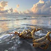 Sea Jewel Art Print