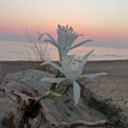 Summer Sea Lilies Art Print