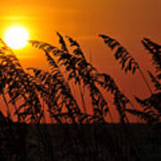 Sea Oats At Sunset Art Print