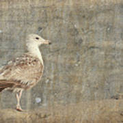 Seagull - Jersey Shore Art Print