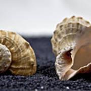 Seashells On Black Sand Art Print