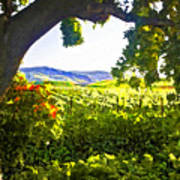 Shady Vineyard Art Print