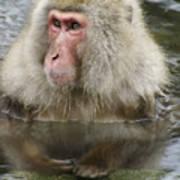 Snow Monkey Bath Art Print