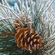 Snowy Pine Cones Art Print