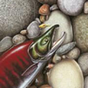 Sockeye Salmon Art Print by JQ Licensing