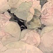 Soft Pink Peonies Art Print