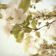 Soft White Flowers Art Print