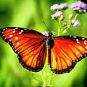 Soldier Butterfly Art Print