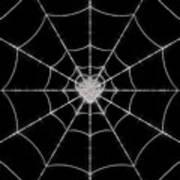 Spider No.2 Art Print