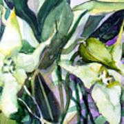 Spider Orchids Art Print