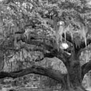 Sprawling Live Oak Art Print