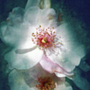 Spring Flowering Art Print