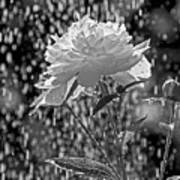Spring Rain - 365-13 Art Print