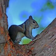 1- Squirrel Art Print