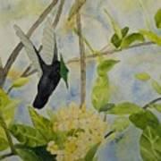 St. Lucian Hummingbird Art Print