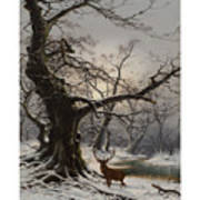 Stag In A Snow Covered Wooded Landscape Art Print