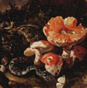 Still Life With Serpents, Fly Agarics And Thistles Art Print