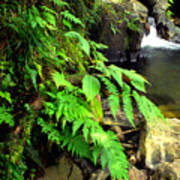Stream El Yunque National Forest Art Print