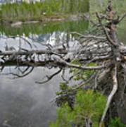 String Lake Reflection Art Print