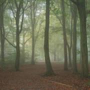 Stunning Colorful Moody Vibrant Autumn Fall Foggy Forest Landsca Art Print