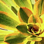 Succulent Close Up Rectangle 2 Photograph By Amy Vangsgard