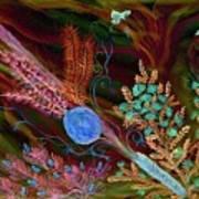 Sukkot-the Lulav Art Print