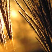 Sun Grass Wind Art Print