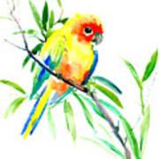 Sun Parakeet Art Print