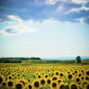 Sunflowers Art Print by Kirstin Mckee