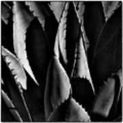 Sunlit Cactus Art Print