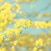 Sunny Blooms 2 Art Print