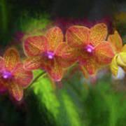 Sunset Doritaenopsis Orchid Art Print