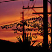 Sunset Sihouettes Art Print