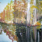Swamp Reflection Art Print