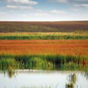 Swamp With Birds Landscape Autumn Season Art Print