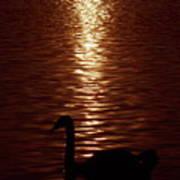 Swan Silhouette Art Print