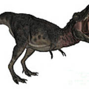 Tarbosaurus Dinosaur Roaring, White Art Print