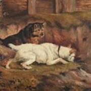 Terriers Ratting Art Print