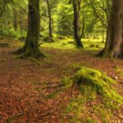 The Ardgartan Forest Art Print