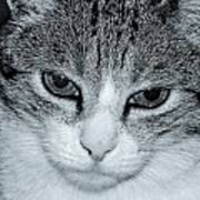 The Cat's Innocense Art Print