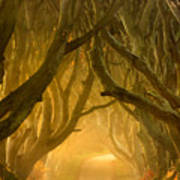 The Dark Hedges IIi Art Print by Pawel Klarecki