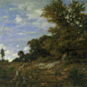 The Edge Of The Woods At Monts-girard, Fontainebleau Forest Art Print