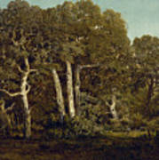 The Great Oaks Of Old Bas-breau Art Print