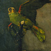 The Green Parrot Art Print